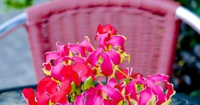 blomstershop