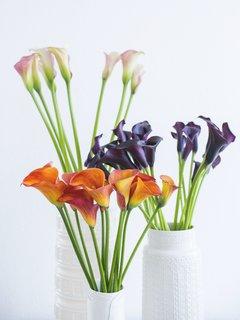 Calla De betekenis van bloemen Lievelingsbloem Lievelingsbloemen Mooiwatbloemendoen.nl