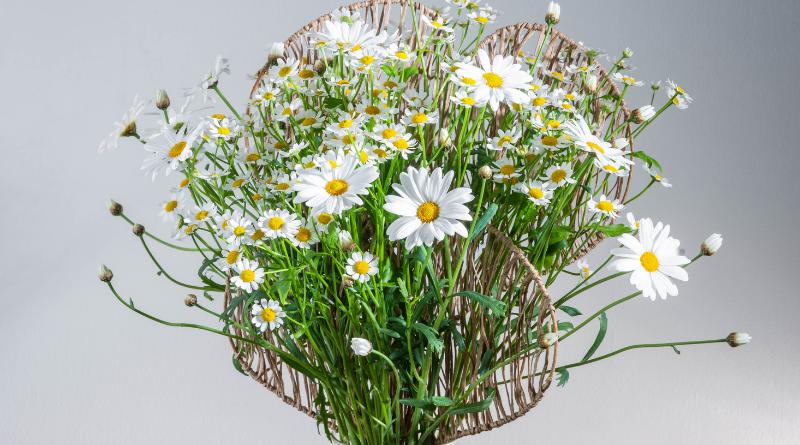 Een vrolijke lentecreatie door FLEUR floriste Moniek Vanden Berghe: een waaier met margrietjes;